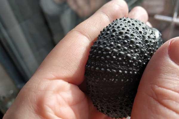 elegoo mars pro sea urchin 3d print